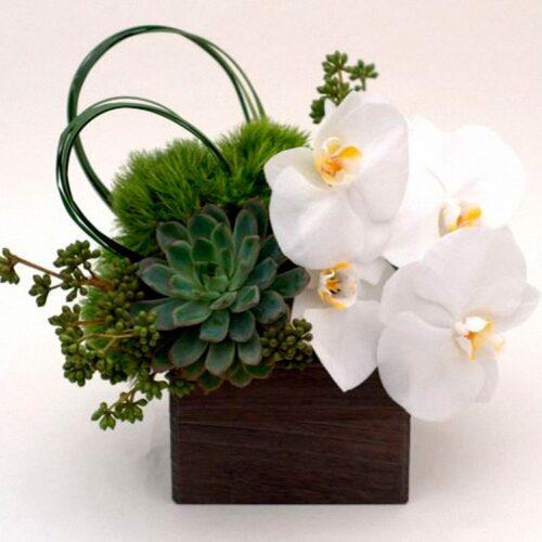3 орхидеи, 5 диантусов, зелень